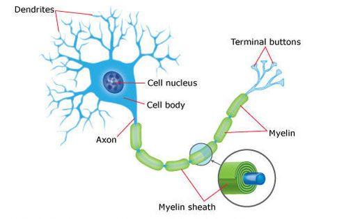 νευρικό κύτταρο